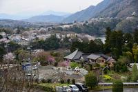 津久井桜の季節#15