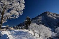 宮ヶ瀬鳥居原の雪景色#7