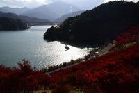 宮ヶ瀬湖鳥居原の紅葉#1