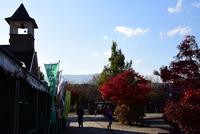 宮ヶ瀬湖鳥居原の紅葉#9