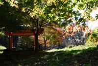 津久井湖・城山公園#4