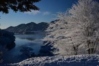 宮ヶ瀬鳥居原の雪景色#1