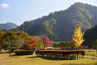 宮ヶ瀬湖畔園地の紅葉#11
