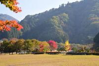 宮ヶ瀬湖畔園地の紅葉#9
