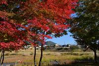 宮ヶ瀬湖畔園地の紅葉#7
