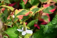 庭先の植物#6