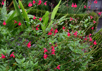 小雨の庭先#5