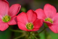 庭先の植物#3