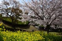 津久井湖水の苑地#6