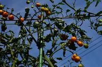 庭先の植物#2
