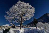 宮ヶ瀬鳥居原の雪景色#2