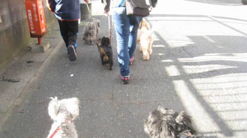 6ワン散歩1