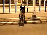 【動画】 事故死した主人、現場の道路で80日間待ち続ける犬が話題に