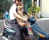 dogs-get-on-scooter