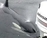 wild-orca-boy