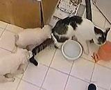 PuppiesPestering