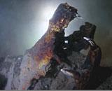 Croc-Fossil