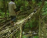 Living-Bridge