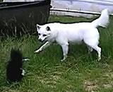 Dog-Meets-Skunk