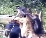 猫がサルに激しく襲いかかる衝撃的な動画が話題に
