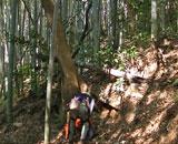 鶴見緑地公園で竹30本が切られた「謎の事件」 その犯人の正体は意外にも・・
