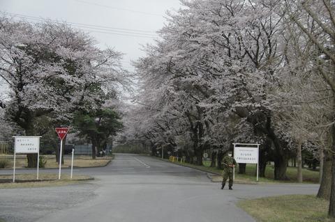 20170326sdf_sakura_01