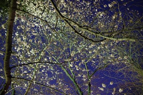 20160331matsudo_light_13