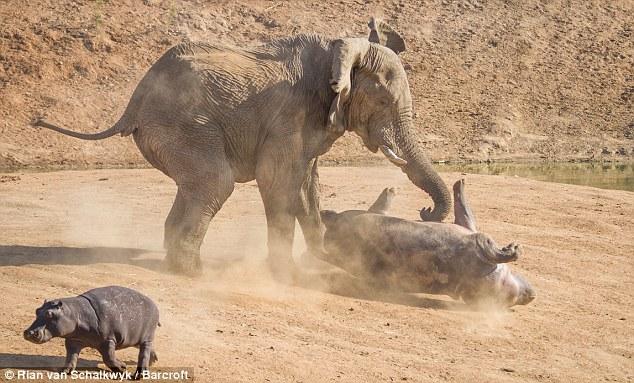 ゾウとライオンが1対1で対決したらどっち ...