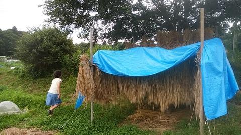 cameringo_2016-06-25_173633