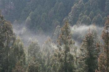 ワイ森林開発担当大臣、全国の杉の伐採を強行する案を提出