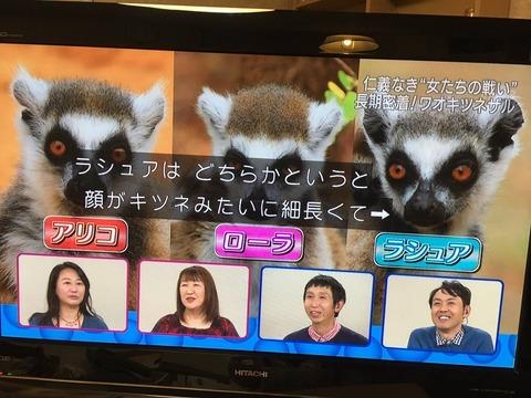 ダーウィンが来た NHK