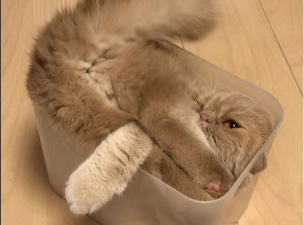 液状化した日本の猫(海外の反応)