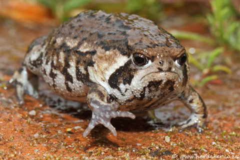 011-20120909melkbos-sandrainfrog