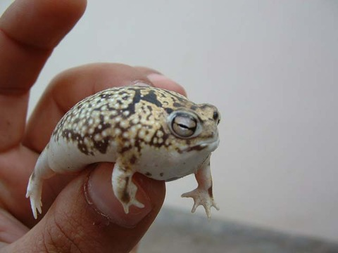 quiz_frogn2