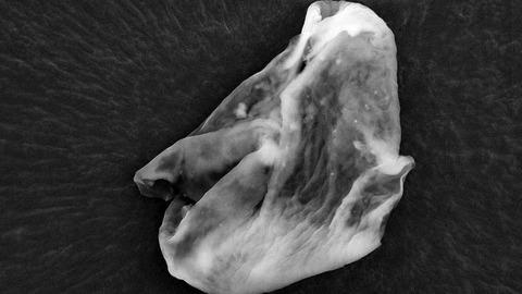 biologicalentitiesfromthestratosphere2-1-762x428