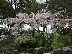 大阪城公園2009春 4