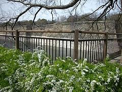 大阪城公園2009春 7