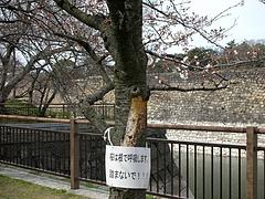 大阪城公園2009春 5