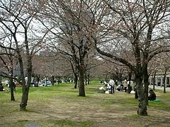 大阪城公園2009春 6