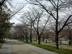 大阪城公園2009春 8