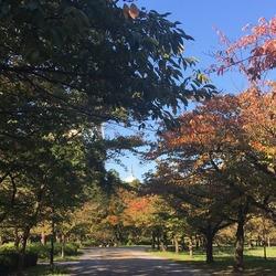 秋らしくさやわか〜な大阪城公園