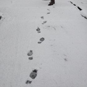 新雪やん(笑)