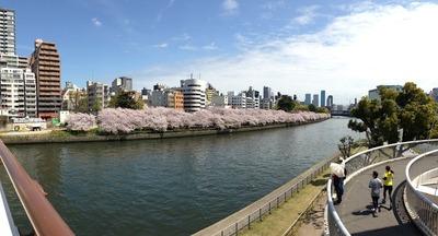 みんな桜が好き