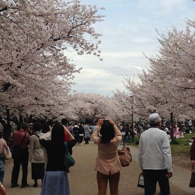 大阪城公園人が多すぎる