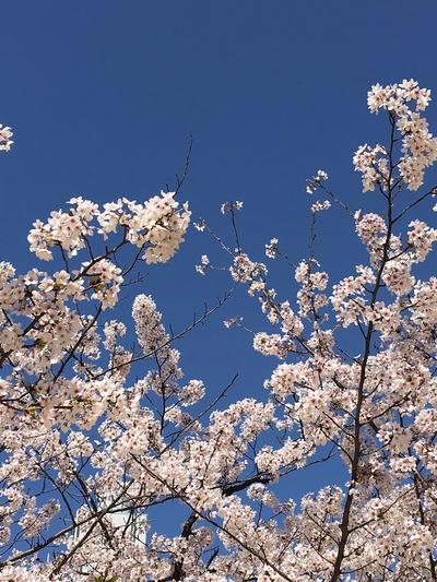 今年は桜が早かった~