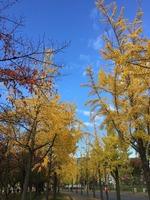 11月19日大阪城公園