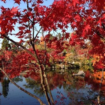池に映る紅葉もいいね