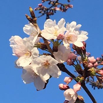 4月2日朝7時大阪城公園