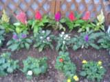 花壇 夏 2