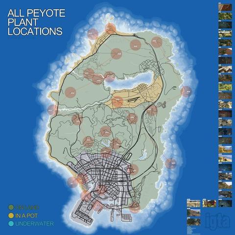 peyote4